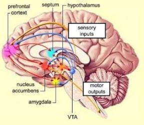 pleasure-center-of-brain