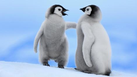 Penguins talking